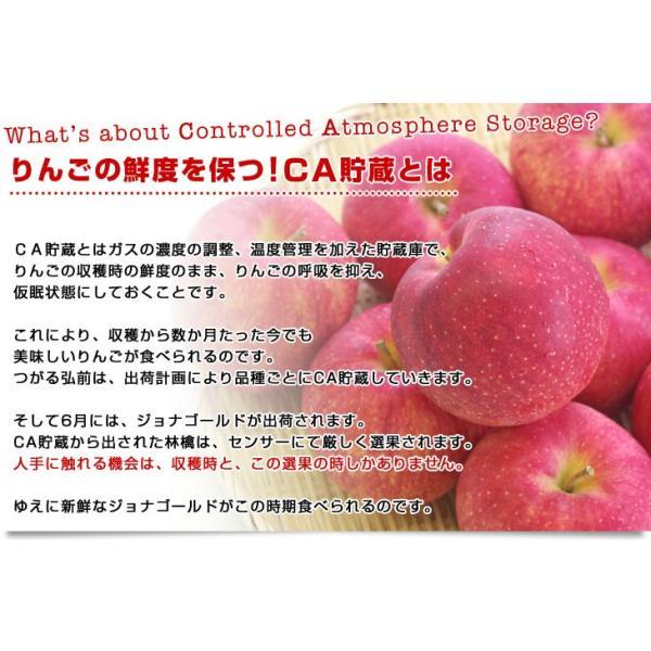 青森県より産地直送 JAつがる弘前 ジョナゴールド CA貯蔵品 約3キロ(9玉から13玉)送料無料 りんご じょなごーるど |sanchokudayori|04