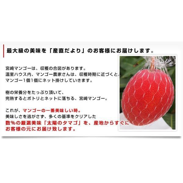 宮崎県より産地直送 JA宮崎中央 太陽のタマゴ 最高級AA品 3L×2玉 (450gから509g×2玉) 送料無料 マンゴー たいようのたまご|sanchokudayori|04