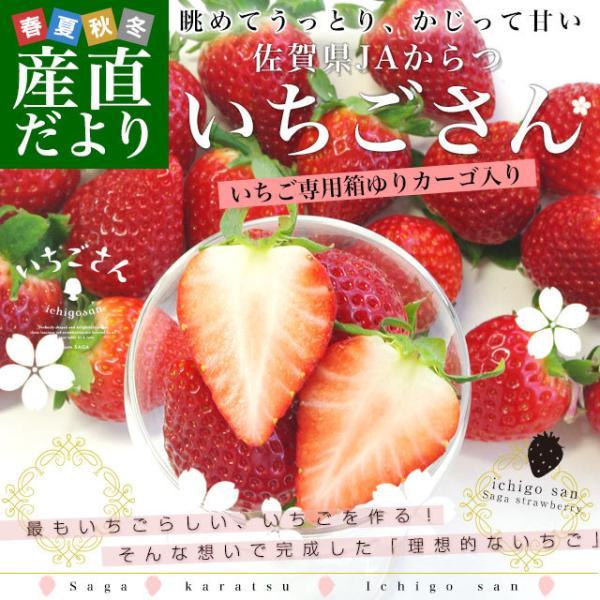 佐賀県より産地直送 JAからつ 新品種いちご いちごさん 苺専用箱ゆりカーゴ入り 450g (15粒から18粒) 送料無料 イチゴ イチゴさん うまかもん sanchokudayori