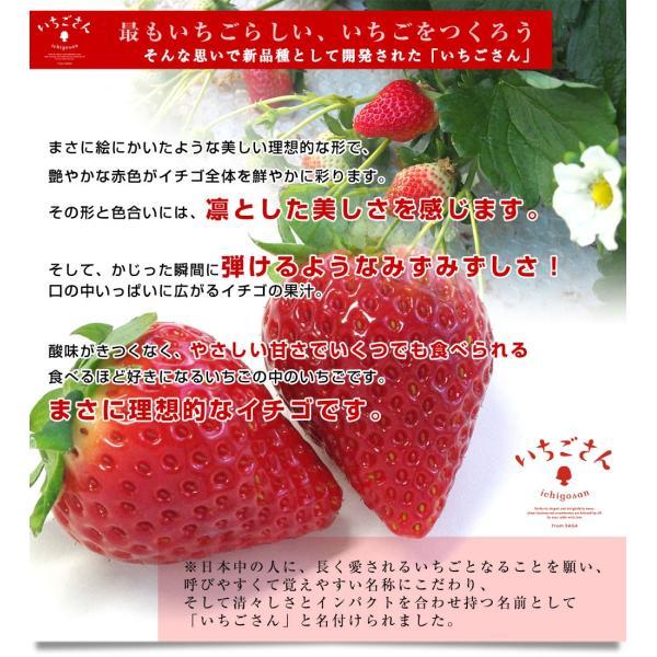 佐賀県より産地直送 JAからつ 新品種いちご いちごさん 苺専用箱ゆりカーゴ入り 450g (15粒から18粒) 送料無料 イチゴ イチゴさん うまかもん sanchokudayori 04