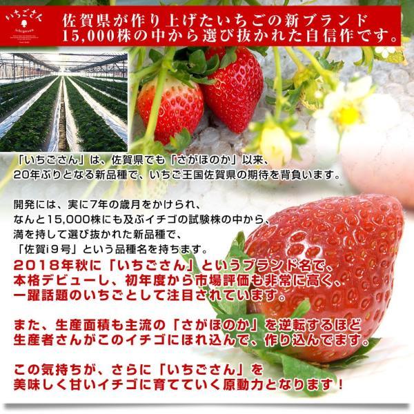 佐賀県より産地直送 JAからつ 新品種いちご いちごさん 苺専用箱ゆりカーゴ入り 450g (15粒から18粒) 送料無料 イチゴ イチゴさん うまかもん sanchokudayori 05