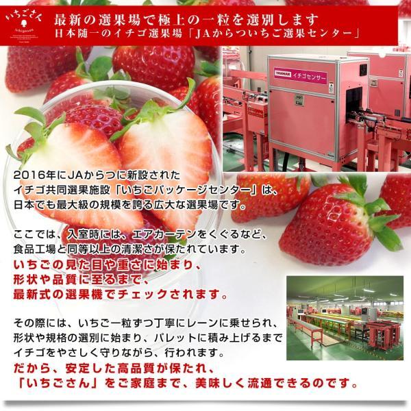 佐賀県より産地直送 JAからつ 新品種いちご いちごさん 苺専用箱ゆりカーゴ入り 450g (15粒から18粒) 送料無料 イチゴ イチゴさん うまかもん sanchokudayori 07