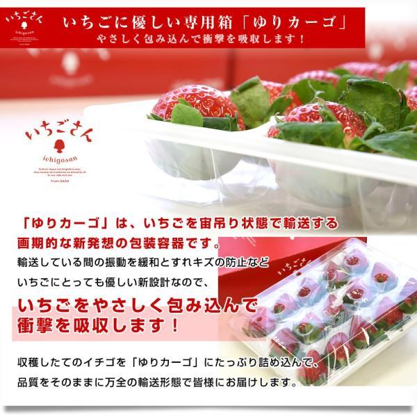 佐賀県より産地直送 JAからつ 新品種いちご いちごさん 苺専用箱ゆりカーゴ入り 450g (15粒から18粒) 送料無料 イチゴ イチゴさん うまかもん sanchokudayori 08