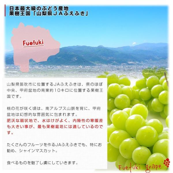 山梨県より産地直送 JAふえふき 大型シャインマスカット 2キロ(3から4房) ぶどう 葡萄 ブドウ|sanchokudayori|06