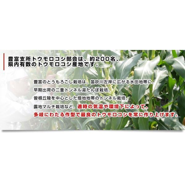 送料無料 山梨県より産地直送 JAふえふき 豊富支所 とうもろこし(ゴールドラッシュ) 2Lサイズ 約2.5キロ 6本 クール便|sanchokudayori|05