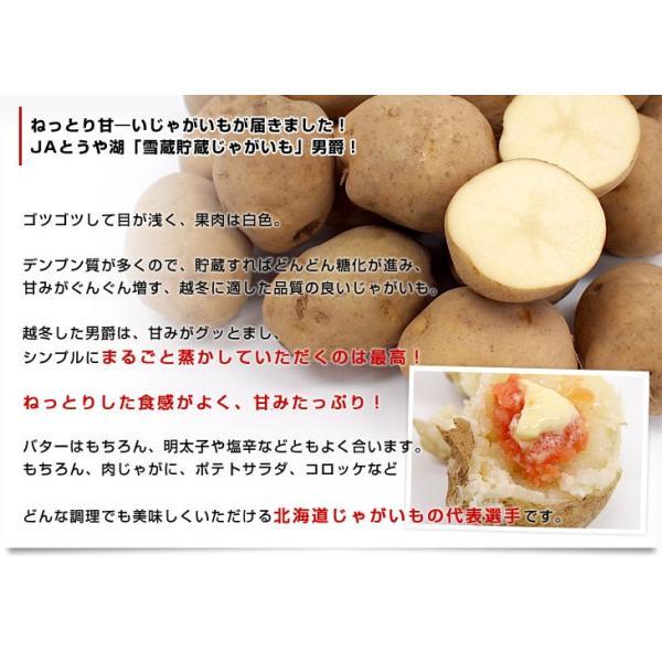 送料無料 北海道より産地直送 JAとうや湖 雪蔵貯蔵じゃがいも (男爵) Mサイズ 10キロ 芋 馬鈴薯|sanchokudayori|04