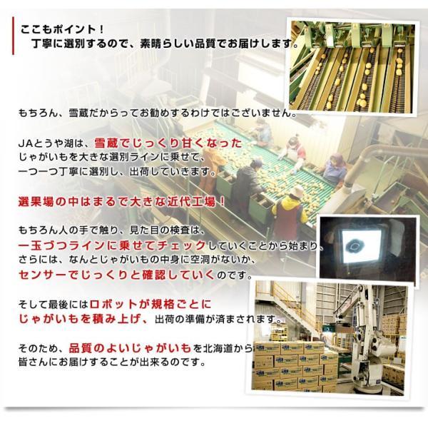 北海道より産地直送 JAとうや湖 雪蔵貯蔵じゃがいも (男爵) Lサイズ 10キロ  送料無料 芋 ジャガイモ 馬鈴薯|sanchokudayori|05