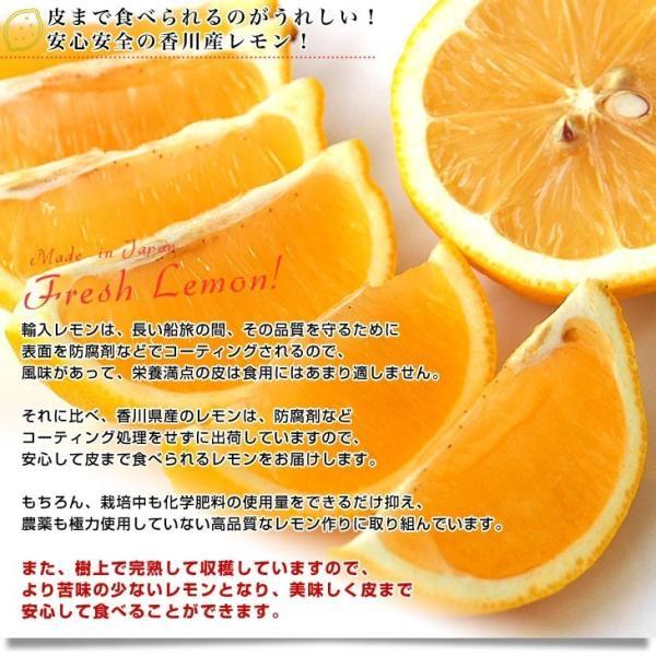香川県から産地直送 JA香川県 完熟レモン 約 2.5キロ (20玉から25玉前後) 送料無料  柑橘 檸檬 国産レモン sanchokudayori 04