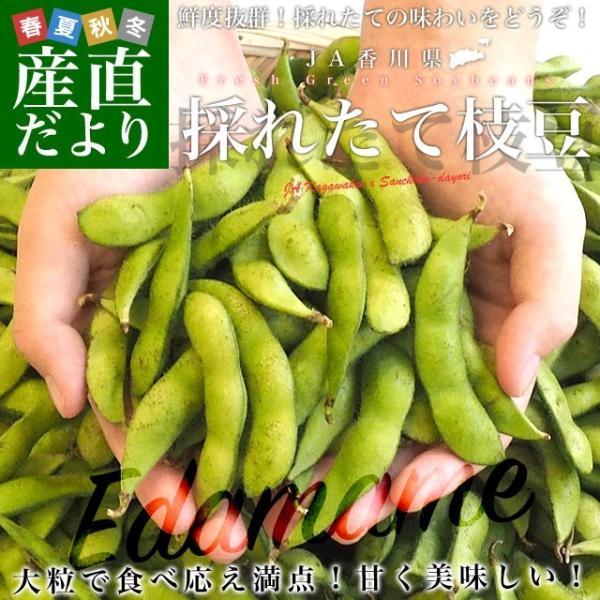 香川県より産地直送 JA香川県 食感がよい大粒の枝豆 たっぷり2キロ 送料無料 えだまめ エダマメ ※クール便|sanchokudayori