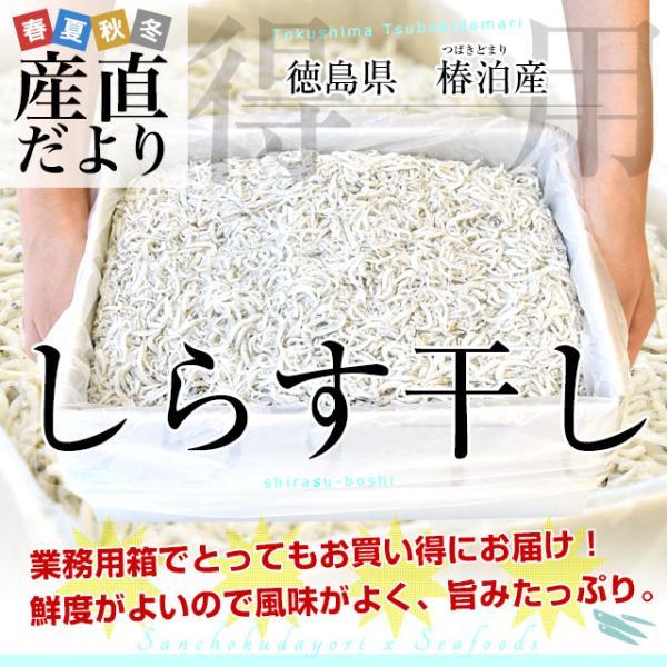 送料無料 徳島県椿泊産 しらす干し 1キロ入り 業務用箱 しらす シラス sanchokudayori