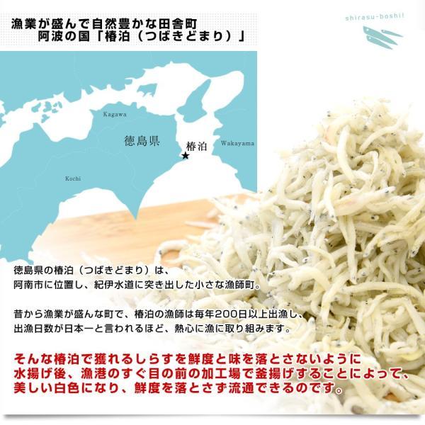 送料無料 徳島県椿泊産 しらす干し 1キロ入り 業務用箱 しらす シラス sanchokudayori 04