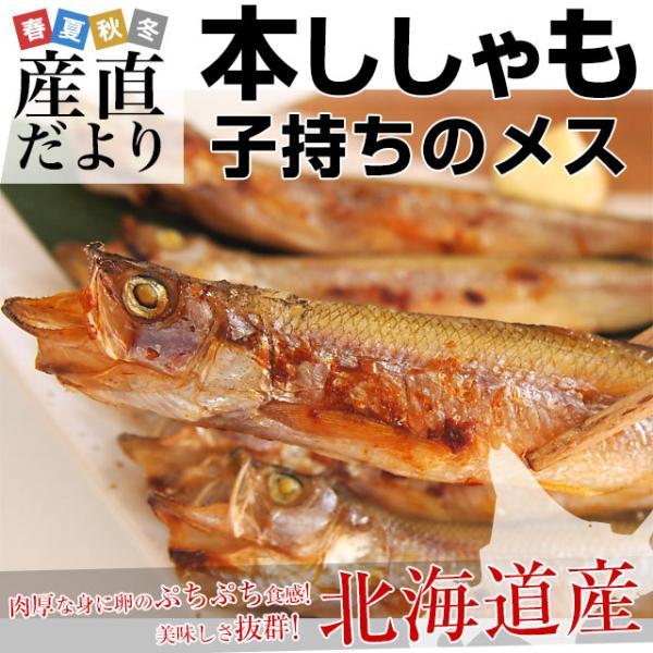 北海道から産地直送 北海道産 本ししゃも 子持ちのメス 30尾入化粧箱 送料無料 柳葉魚 本シシャモ|sanchokudayori