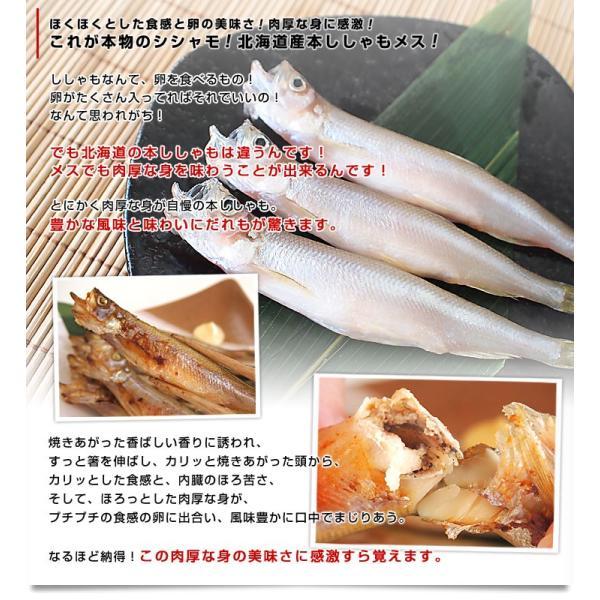 北海道から産地直送 北海道産 本ししゃも 子持ちのメス 30尾入化粧箱 送料無料 柳葉魚 本シシャモ|sanchokudayori|04