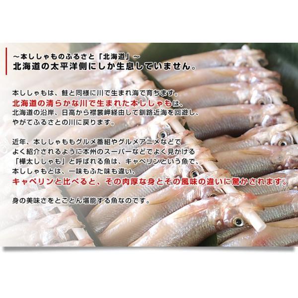 北海道から産地直送 北海道産 本ししゃも 子持ちのメス 30尾入化粧箱 送料無料 柳葉魚 本シシャモ|sanchokudayori|05
