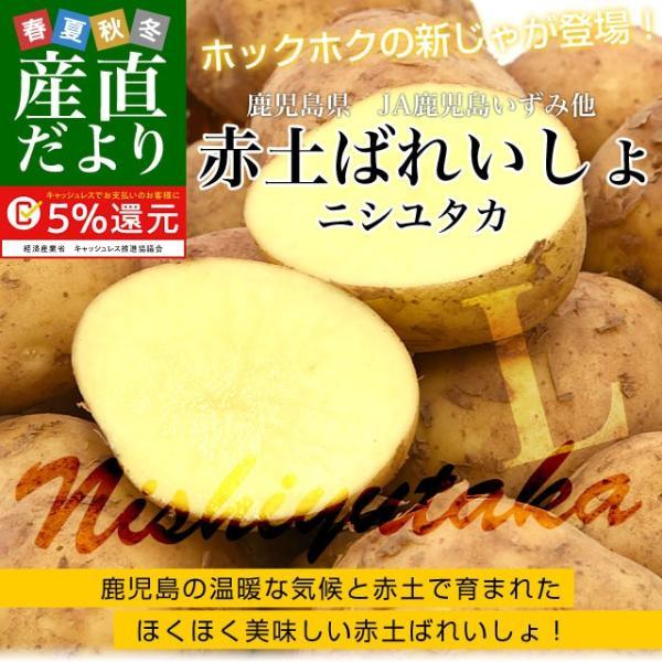 鹿児島県産 JA鹿児島いずみ他 赤土ばれいしょ 新じゃが ニシユタカ Lサイズ 約10キロ 馬鈴薯  じゃがいも ジャガイモ 市場スポット|sanchokudayori