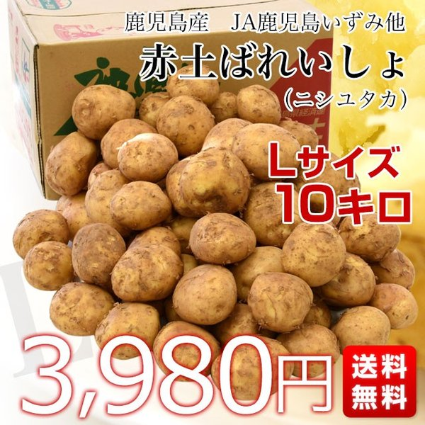 鹿児島県産 JA鹿児島いずみ他 赤土ばれいしょ 新じゃが ニシユタカ Lサイズ 約10キロ 馬鈴薯  じゃがいも ジャガイモ 市場スポット|sanchokudayori|02