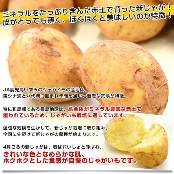 鹿児島県産 JA鹿児島いずみ他 赤土ばれいしょ 新じゃが ニシユタカ Lサイズ 約10キロ 馬鈴薯  じゃがいも ジャガイモ 市場スポット|sanchokudayori|03