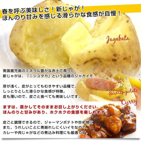 鹿児島県産 JA鹿児島いずみ他 赤土ばれいしょ 新じゃが ニシユタカ Lサイズ 約10キロ 馬鈴薯  じゃがいも ジャガイモ 市場スポット|sanchokudayori|04