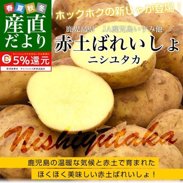 鹿児島県産 JA鹿児島いずみ他 赤土ばれいしょ 新じゃが ニシユタカ Mサイズ 約10キロ 馬鈴薯  じゃがいも ジャガイモ 市場スポット sanchokudayori