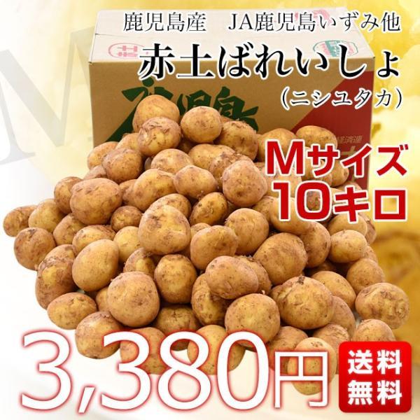鹿児島県産 JA鹿児島いずみ他 赤土ばれいしょ 新じゃが ニシユタカ Mサイズ 約10キロ 馬鈴薯  じゃがいも ジャガイモ 市場スポット sanchokudayori 02