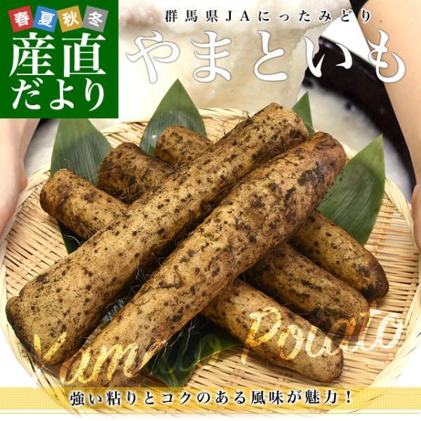 群馬県産 JAにったみどり やまといも 2キロ 送料無料 ヤマトイモ 大和芋 山芋 市場スポット|sanchokudayori