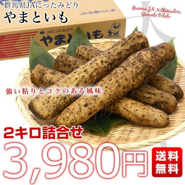 群馬県産 JAにったみどり やまといも 2キロ 送料無料 ヤマトイモ 大和芋 山芋 市場スポット|sanchokudayori|02