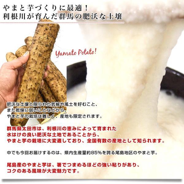 群馬県産 JAにったみどり やまといも 2キロ 送料無料 ヤマトイモ 大和芋 山芋 市場スポット|sanchokudayori|04