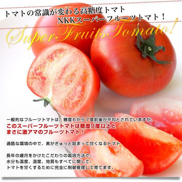 茨城県より産地直送 NKKアグリドリーム スーパーフルーツトマト 9度+ A品 約1キロ(8玉から16玉)  送料無料 高糖度トマト NKKトマト|sanchokudayori|03