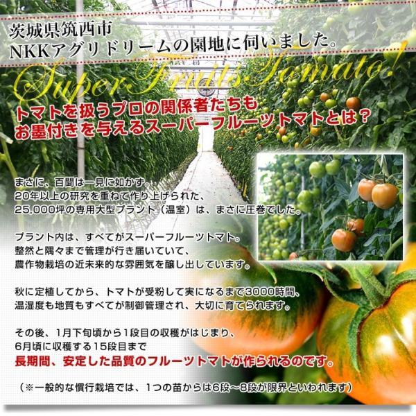 茨城県より産地直送 NKKアグリドリーム スーパーフルーツトマト 9度+ A品 約1キロ(8玉から16玉)  送料無料 高糖度トマト NKKトマト|sanchokudayori|05