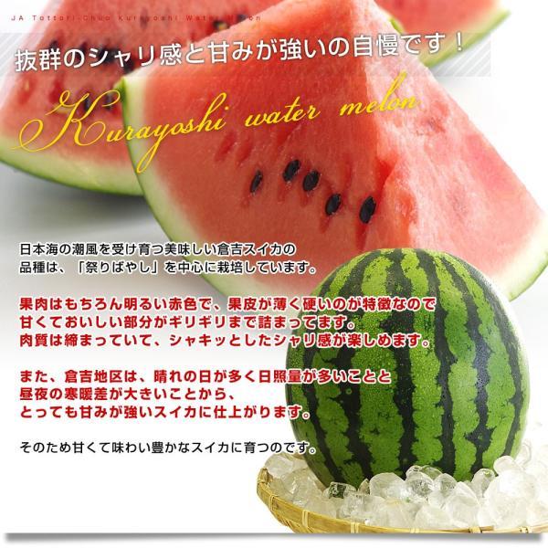 鳥取県から産地発送 JA鳥取中央 倉吉スイカ 秀品 大玉 3Lから4L  8キロ以上1玉 すいか 西瓜 送料無料 sanchokudayori 04