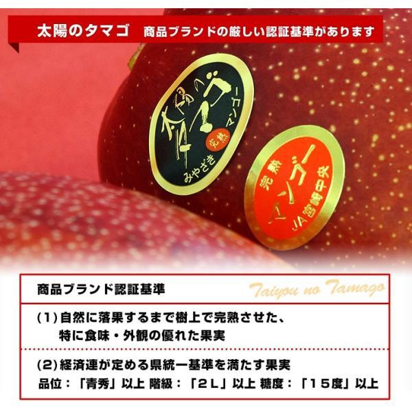 宮崎県より産地直送 JA宮崎中央 太陽のタマゴ 最高級AA品 5Lサイズ (650g以上×1玉) 送料無料 マンゴー たいようのたまご|sanchokudayoriplus|05