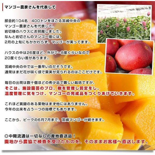 宮崎県より産地直送 JA宮崎中央 太陽のタマゴ 最高級AA品 5Lサイズ (650g以上×1玉) 送料無料 マンゴー たいようのたまご|sanchokudayoriplus|10