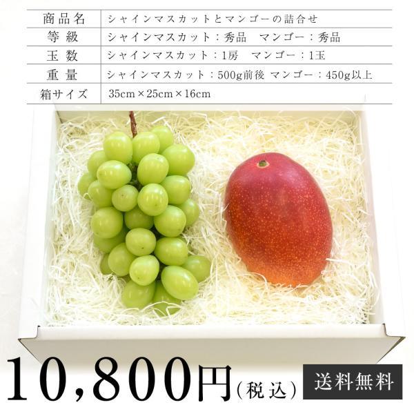 シャインマスカットと宮崎マンゴー 詰合せフルーツセット 化粧箱入り ぶどう まんごー 送料無料 お中元ギフト|sanchokudayoriplus|05