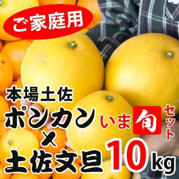 土佐文旦&ポンカン【いま旬セット】
