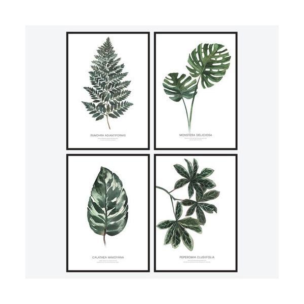 ポスター インテリア A3 ボタニカル 植物 おしゃれ アートポスター アートプリント アートフレーム ボタニカル 選べる12種類 29.7x42cm フレームなし|sangsanghoo-jp|02