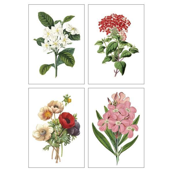 ポスター インテリア A3 ボタニカル 植物 おしゃれ アートポスター アートプリント アートフレーム ボタニカル 選べる12種類 29.7x42cm フレームなし sangsanghoo-jp 06