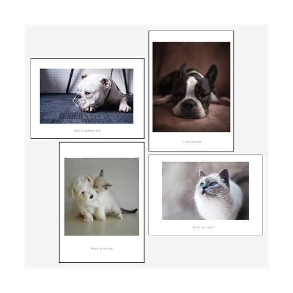 ポスター アートポスター おしゃれ インテリアポスター フォトポスター A3 4枚セット北欧 モダン 植物 選べる12種類 29.7x42cm フレームなし|sangsanghoo-jp|11