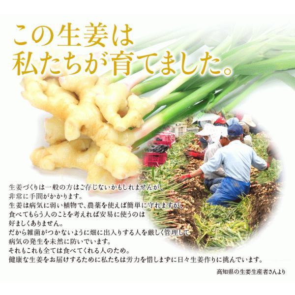 乾燥生姜粉末 30g   乾燥生姜 生姜粉末  生姜パウダー  高知県産生姜100%  なま生姜100個分のショウガオール含有|sanwa-y|03