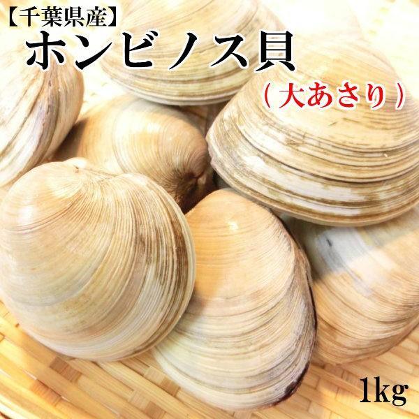 ホンビノス貝 大あさり  1kg  鮮度抜群! 大粒 蛤 (約9〜12個入り)・ホンビノス貝・