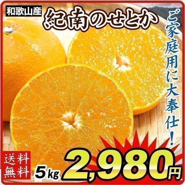 みかん 和歌山産 紀南のせとか(5kg)ご家庭用 数量限定 無選別 木熟 トロトロ食感 柑橘 フルーツ 国華園