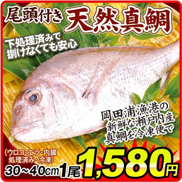 岡田浦の鯛