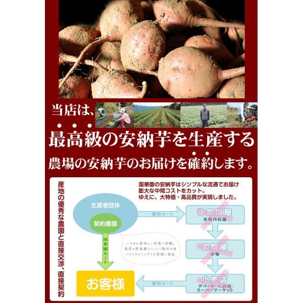 安納芋 種子島産 ぶっこみ安納芋 訳ありミックス 10kg 1組 送料無料 無選別 特別版【数量限定】【早割】|seikaokoku|09