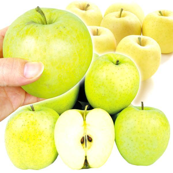 りんご 青森産 おまかせちびりんご・青りんご(10kg)50〜60玉 ご家庭 ...