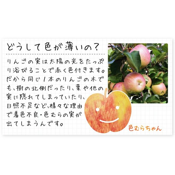 りんご 色むらふじりんご 10kg1箱 青森県産 ご家庭用 訳あり 林檎 食品 グルメ 現在出荷中 果物 seikaokoku 04