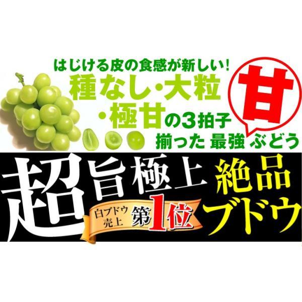 ぶどう シャインマスカット 2房 山梨・長野県産他 ご家庭用 葡萄 ブドウ食品|seikaokoku|06