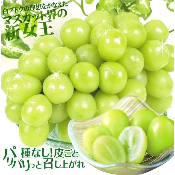 ぶどう シャインマスカット 2房 山梨・長野県産他 ご家庭用 葡萄 ブドウ食品|seikaokoku|07