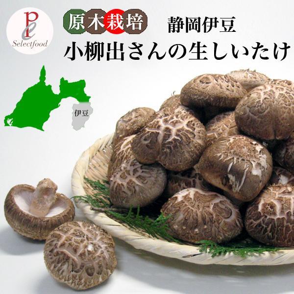生しいたけ 椎茸 原木栽培 静岡伊豆産 1kg