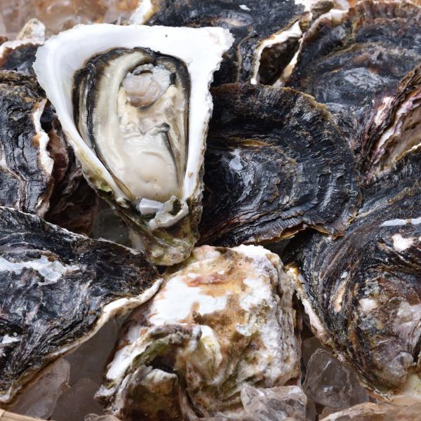 岩がき\グルメ大賞連続受賞の店/日本海産岩がき「岩がき/約2kg」超冷 岩ガキ 岩牡蠣
