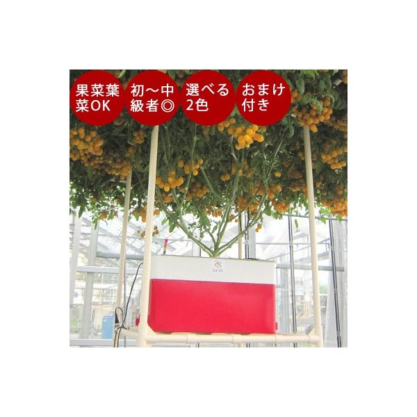 水耕栽培 ホームハイポニカ Sarah+ サラプラス 水耕栽培キット 野菜 花 イチゴ 液体 肥料 スポンジ