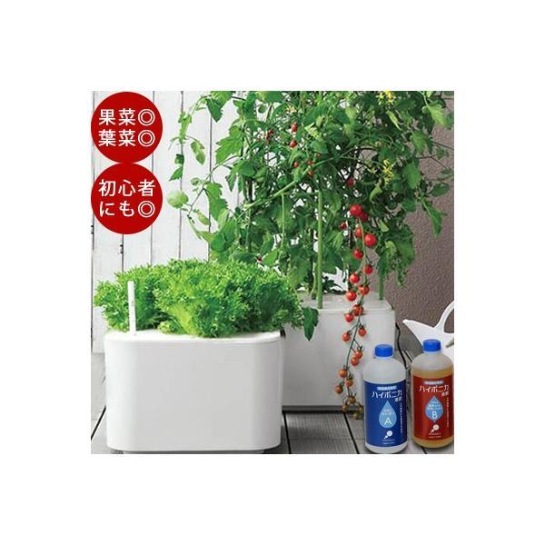 水耕栽培 ホームハイポニカ MASUCO  マスコ 水耕栽培キット 野菜 花 イチゴ肥料 スポンジ トマト